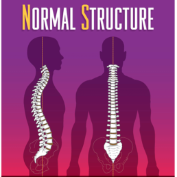 Revolution Chiropractic Blog - What Are NeuroStructural Shifts (1)