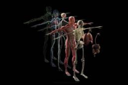 Revolution Chiropractic - Dr Mark Illguth - Sciatica Pain - 2